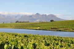Winelands Sudafrica di Stellenbosch Fotografia Stock Libera da Diritti