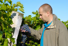 Winemaker Stock Photography