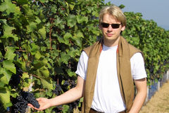 Winemaker. Cheking the wineyards royalty free stock image
