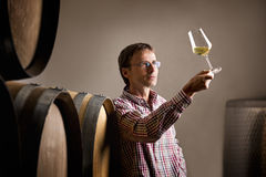 Winemaker analyzing white wine in cellar. Wine producer inspecting quality of white wine during wine tasting in cellar in front of barrels royalty free stock images