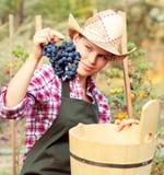 Winemaker Royalty Free Stock Photo