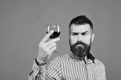 Winemaker with concentrated face holds wineglass. Viticulture and autumn concept. Sommelier tastes expensive beverage. Man with beard examines glass of red wine royalty free stock images