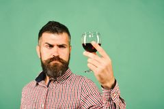 Winemaker with concentrated face holds wineglass. Viticulture and autumn concept. Sommelier tastes expensive beverage. Man with beard examines glass of red royalty free stock images