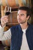Winemaker dans la cave avec du vin Photographie stock