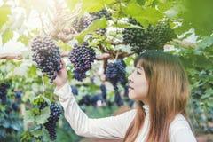 Winemaker de Woman del agrónomo que comprueba las uvas en viñedo foto de archivo