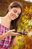Winemaker die druiven waarnemen royalty-vrije stock foto