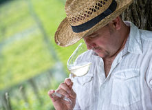 Winemaker drinks white wine. Winemaker tasting a glass white wine in the vineyard Stock Images