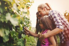 Winemaker family together in vineyard. Winemaker family happy together in vineyard before harvesting royalty free stock photography