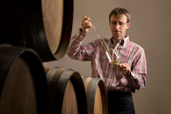Winemaker im Keller, der Weinprüfung bildet. Lizenzfreies Stockbild