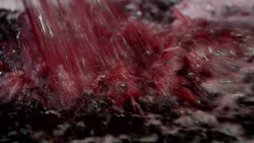 Winemaker Making Wine Test en sótano del lagar