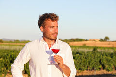Winemaker man drinking rose or red wine, vineyard. Winemaker man drinking rose or red wine at vineyard from wine glass outdoors Royalty Free Stock Photos