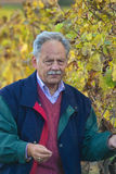 Winemaker maturo Fotografia Stock