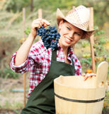 Winemaker. Smiling female gardener harvesting grape and putting it into wood bucket. Young winemaker in hat and apron in the vineyard stock photo