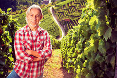 Winemaker Standing By His Vineyard. Backlit by the setting sun, some lens flare royalty free stock images