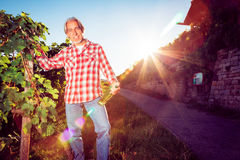 Winemaker Standing By His Vineyard Stock Photos