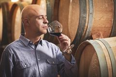 Winemaker tasting red wine in front of wine barrels stock photo