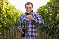 Winemaker tasting red wine. Young winemaker tasting red wine in vineyard royalty free stock images