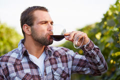 Winemaker tasting red wine Stock Photography