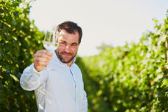Winemaker tasting white wine in vineyard Royalty Free Stock Photo