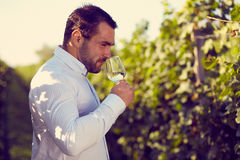 Winemaker tasting white wine. In vineyard at sunny day. Toned stock photos