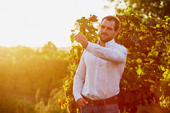 Winemaker tasting white wine. In vineyard at sunset. Toned royalty free stock photography