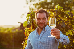 Winemaker tasting white wine. In vineyard at sunset. Toned stock photo