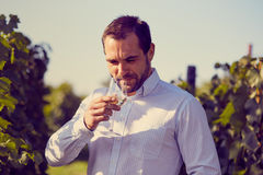 Winemaker tasting wine Royalty Free Stock Photo
