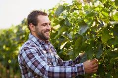 Winemaker in the vineyard Stock Image