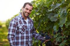 Winemaker in vineyard Royalty Free Stock Images