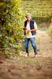 Winemaker in the vineyard. Smiling winemaker in the vineyard stock photography