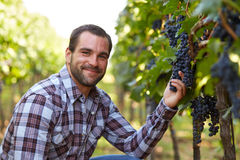 Winemaker in vineyard Royalty Free Stock Photos