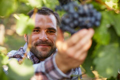 Winemaker in vineyard Royalty Free Stock Image