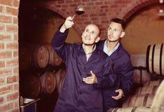2 winemakers с образцом вина в погребе Стоковое Фото