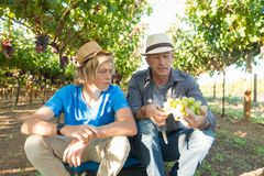 Winemakers father and son in vineyard royalty free stock image