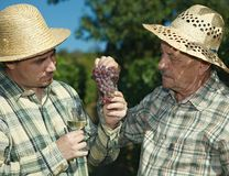 Winemakers goûtant des raisins. Image stock