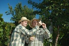 Winemakers que testam o vinho Fotografia de Stock