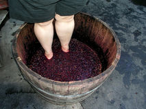 Winemaking. Woman crushing grapes Stock Images