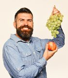 Winemaking and autumn fruits concept. Winegrower with cheerful face. Holds grapes and red fruit. Man with beard holds bunch of green grapes and apple isolated royalty free stock image