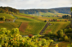 Winemaking region landscape in south Germany. Autumn landscape with the view on vineyard hills Royalty Free Stock Photography