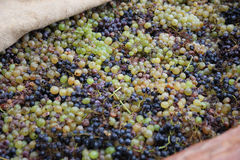 Winemaking Stock Images
