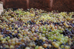 Winemaking Royalty Free Stock Photo