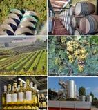 Winemaking. Set of images of winemaking Royalty Free Stock Images
