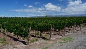 Wineproduktion royaltyfri bild