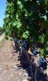 Wineproduktion royaltyfri fotografi