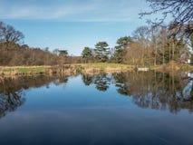 winer树的反射在一个寂静的湖的 免版税库存照片