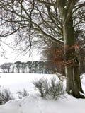Winerhout Royalty-vrije Stock Foto