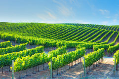 Wineries. In Napa Valley, California Stock Images