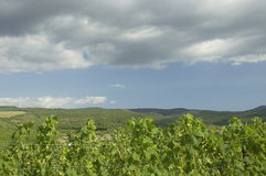 Wineries in Valley. Wineries in Valley over sky with clouds Royalty Free Stock Images