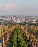 Wineries and Vineyards in Vienna. Wineries in Vienna`s kahlenberg at the start of the season before the vines have started producing grapes. Part of the Vienna Stock Photos
