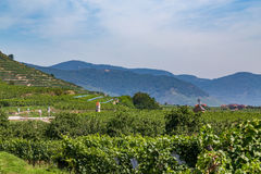 Wineries in the Wachau Valley. During the day in the summer Stock Photo